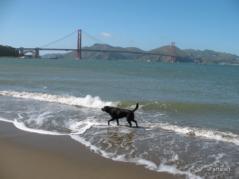golden-gate-and-dog