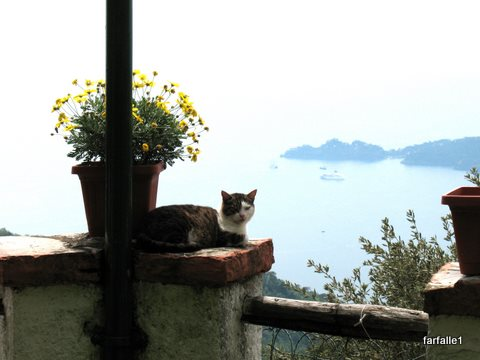 Il Pellegrino kitty with Portofino in backgroundA