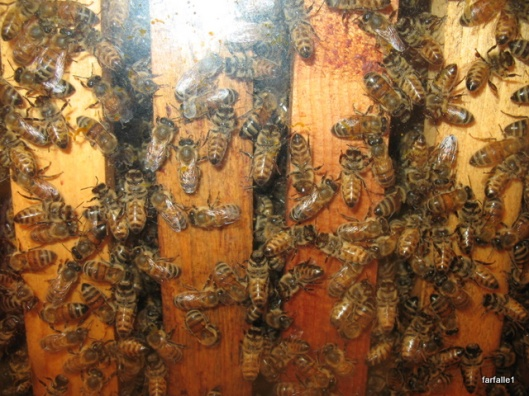 bees (2)
