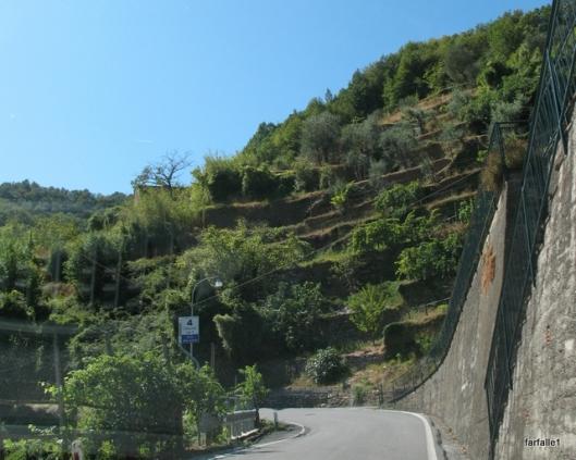 terraced hillsideA
