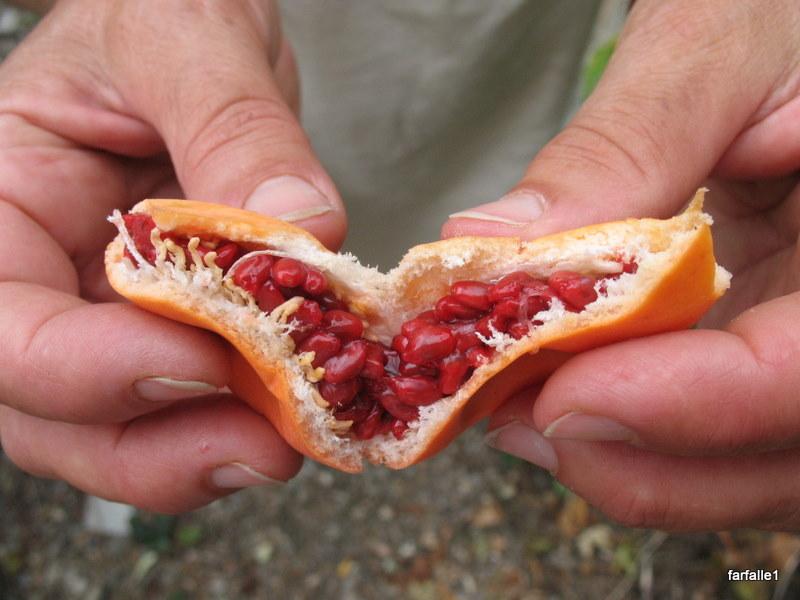 Passion Fruit Flowers Un ex espatriato-8780