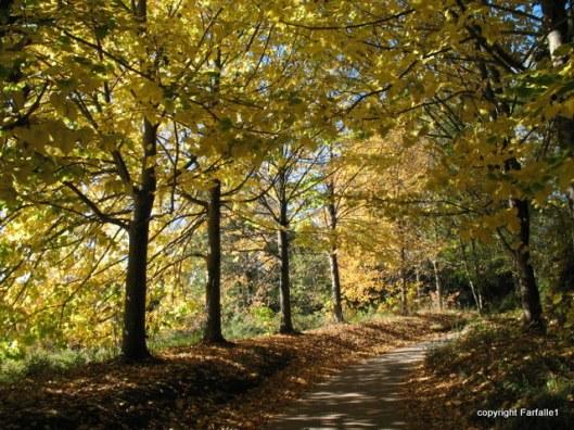 magic light on fall golf course path