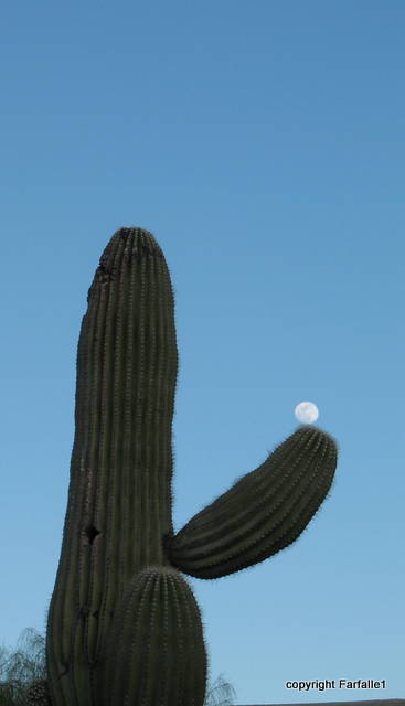 moon over cactus-1