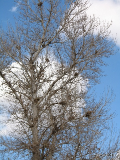 nests in tree