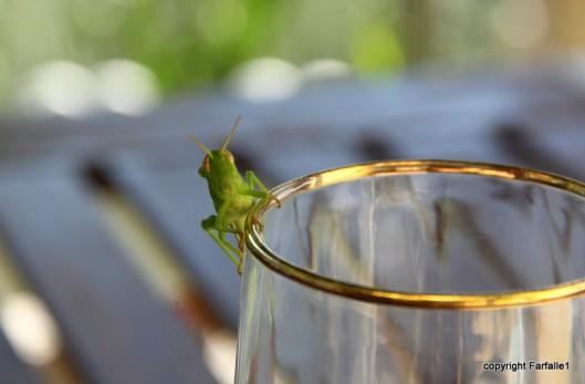 grasshopper-007