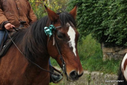 be-ribboned horse