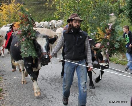 cows festooned
