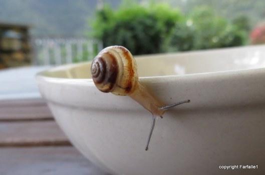 snail two-001