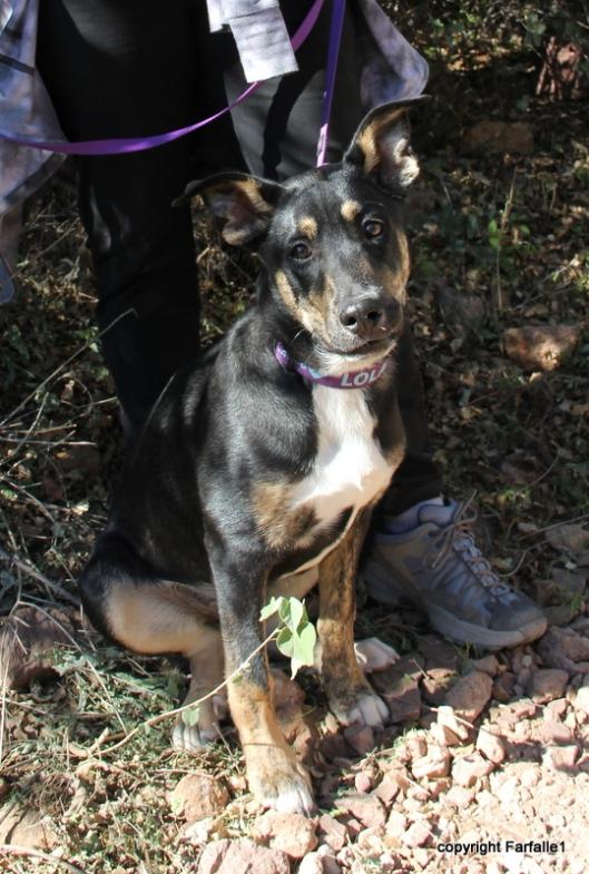 Lola rescue dog-001