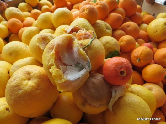 United Food Bank Tour bad fruit-002