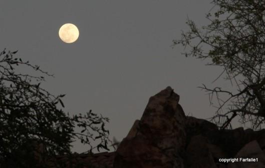 nearly full moon-006