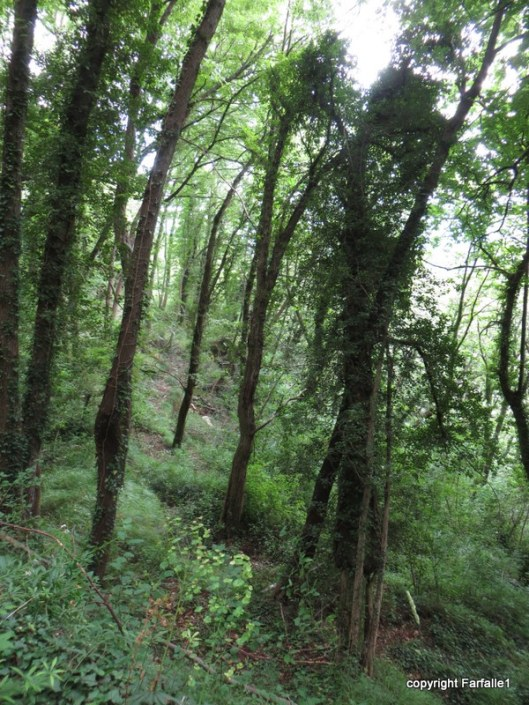 creaking trees