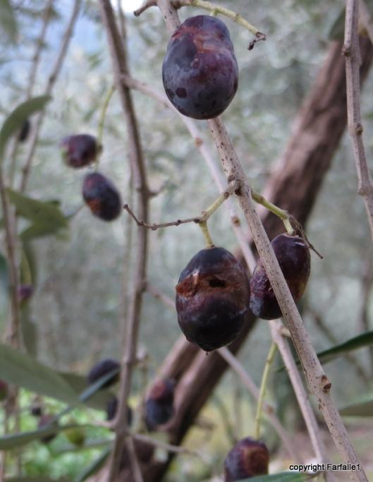 bad olives-001