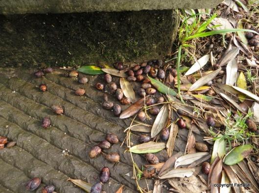 bad olives-003
