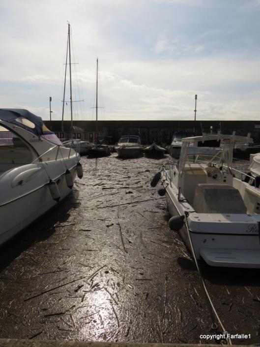 flotsam and jetsam in port-001