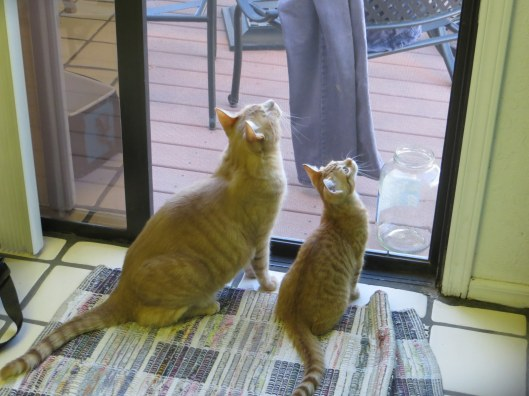 Jack and Jill birdwatching
