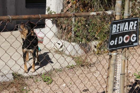 Superior House Tour beware of dog & dog