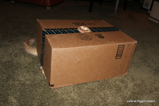 jill-in-the-box-003