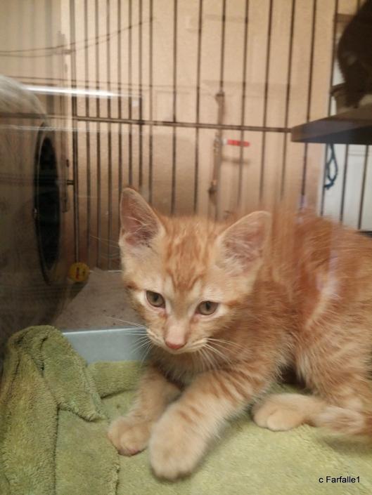 shelter-kitty