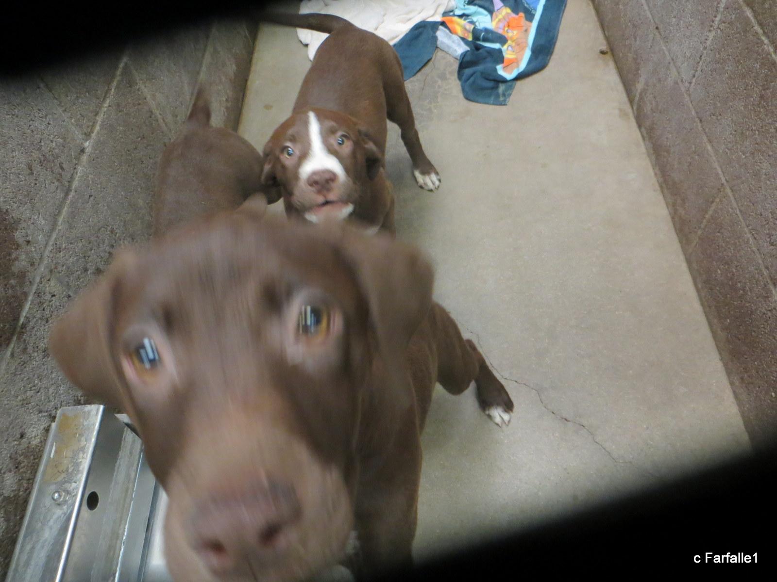 bigger puppies-002