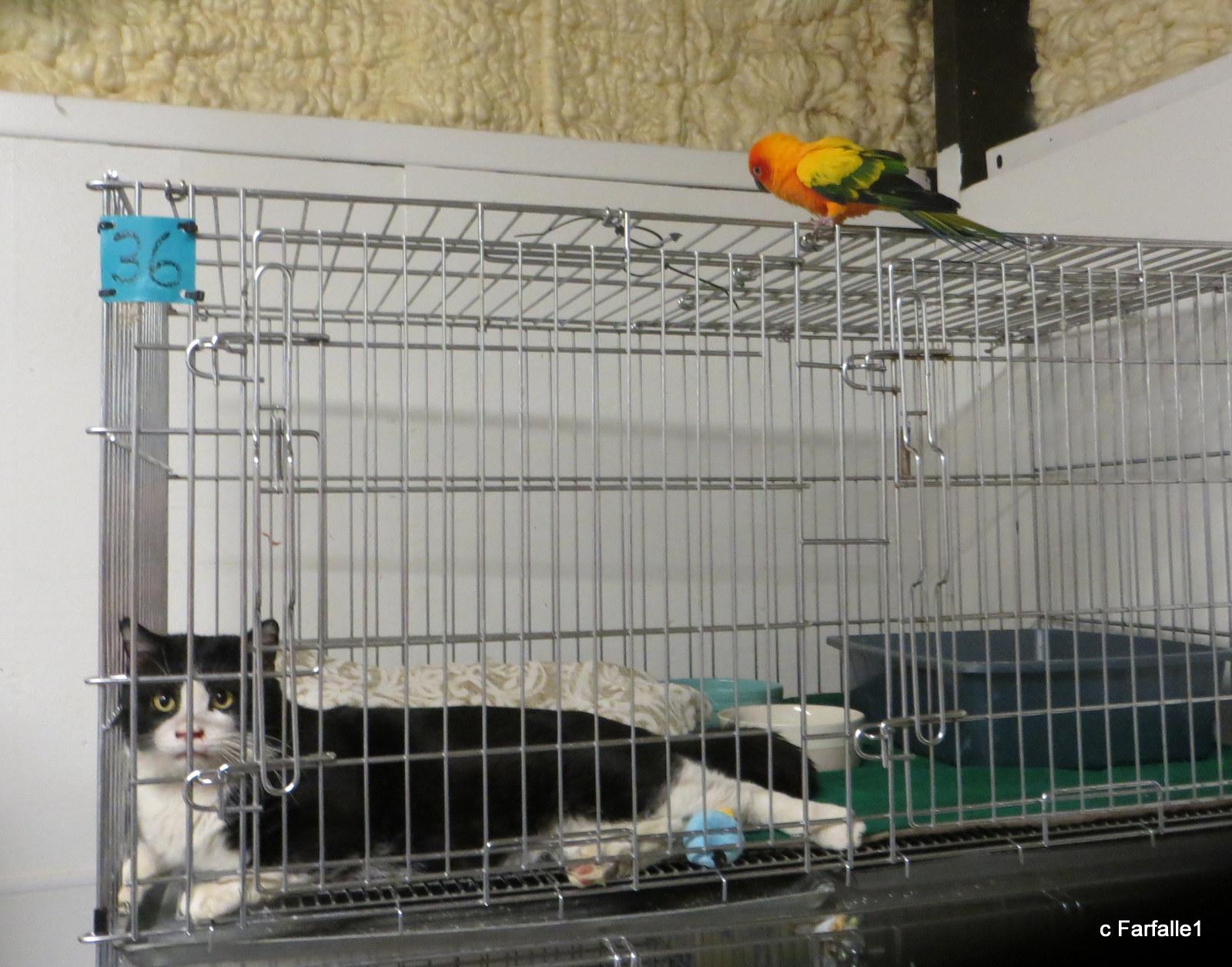 bird on cat cage