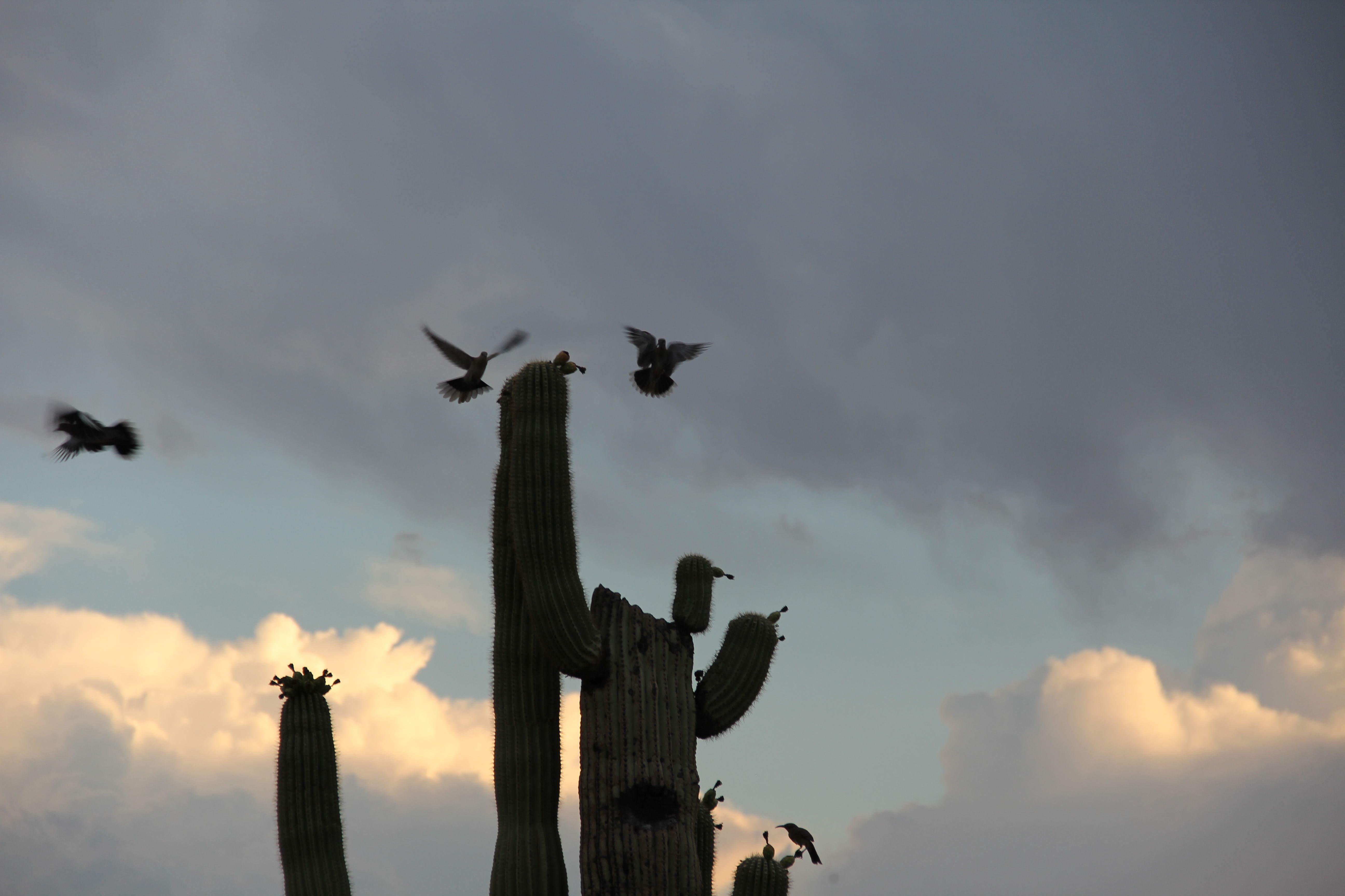 doves alightingA