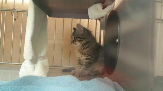 fuzzy kitten